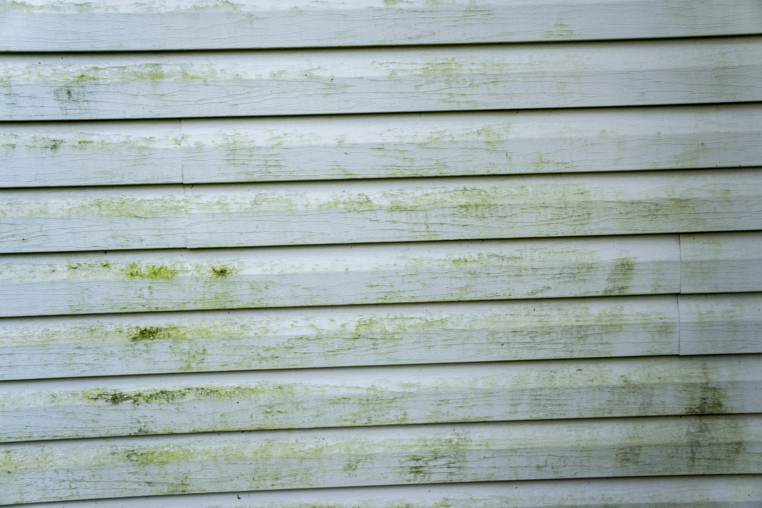 A healthy home – get rid of moss mould and lichen around your house.